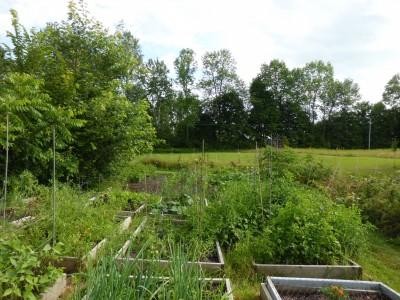 How is your garden growing?