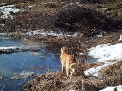 Checking on the Owre's Pond